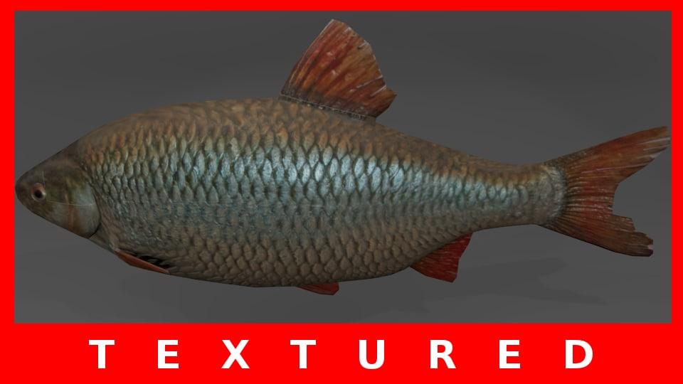 Free obj model fish rudd for Who sells fishing license near me