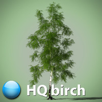 Birch tree 3d model Betula pendula