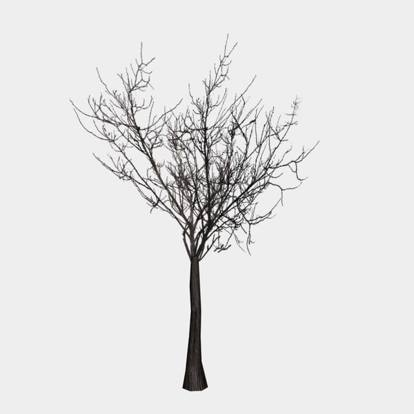 free tree images