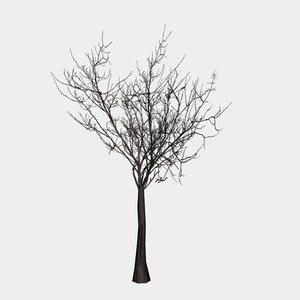 free tree branch 3d model