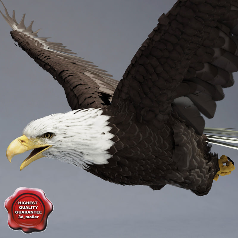 3d model bald eagle pose 3