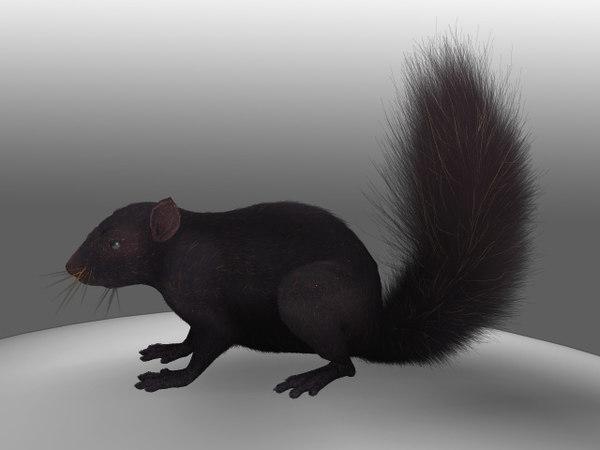 3d model black squirrel