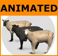 ready sheep set animations 3d fbx