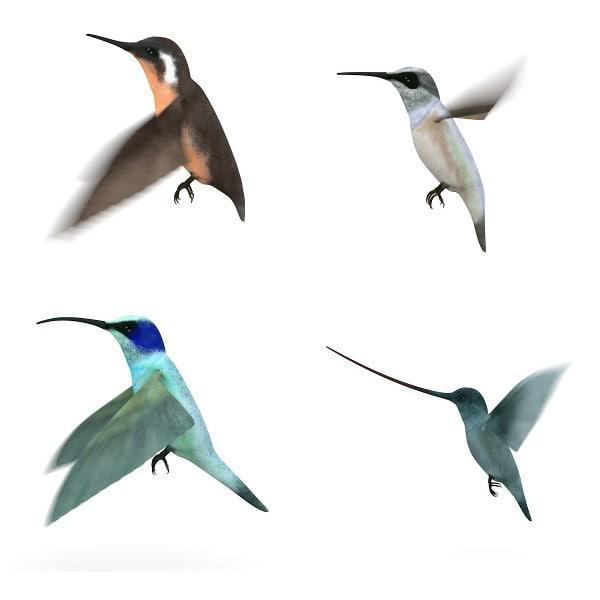 3d colibri birds