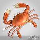 Mud Crab Boiled