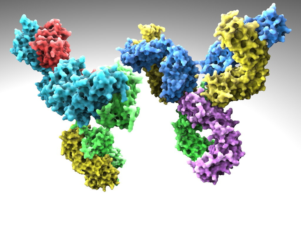 human antibodies 3d model