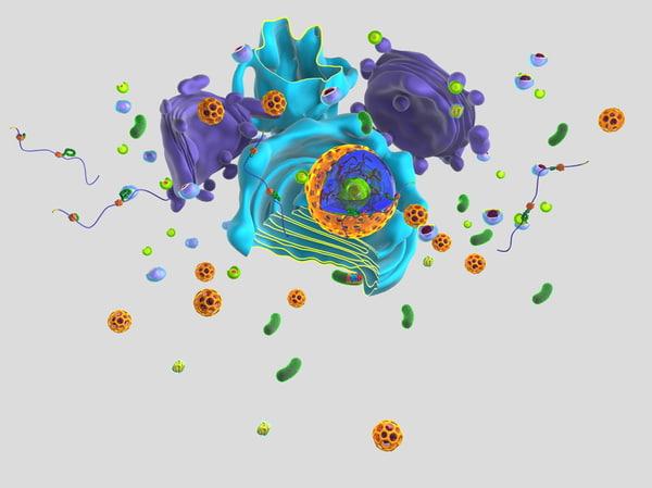 3d contents eukaryotic endoplasmatic