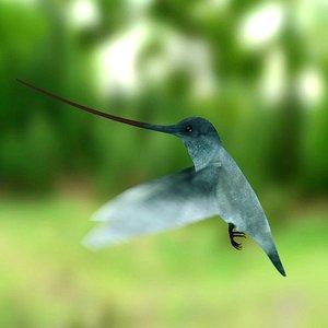 3d colibri bird model