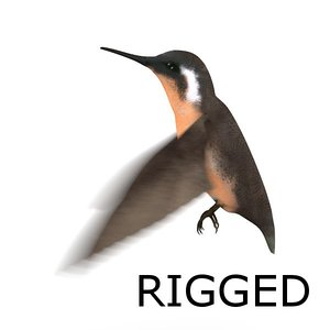 colibri bird rigged blend