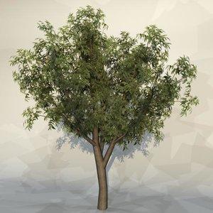 maya pc tree