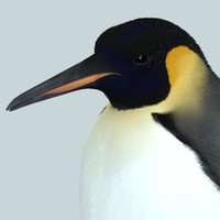 3d model photorealistic penguin