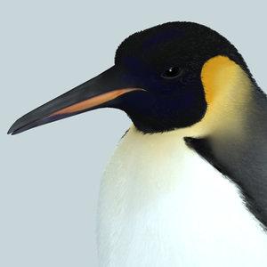 3d model photorealistic penguin