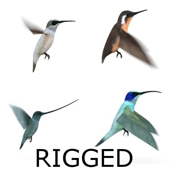 3d colibri birds rigged model