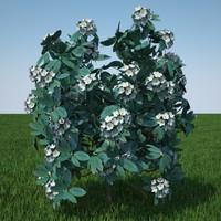 plant flowers 3d obj