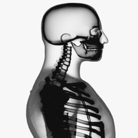 x-ray skeleton xray body human obj