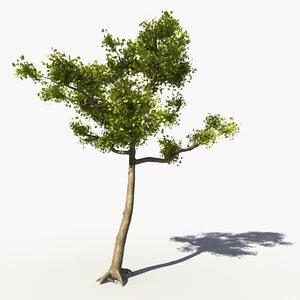 3ds max realistic maple tree