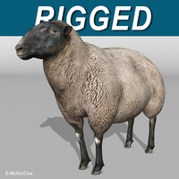 Sheep ( Black )