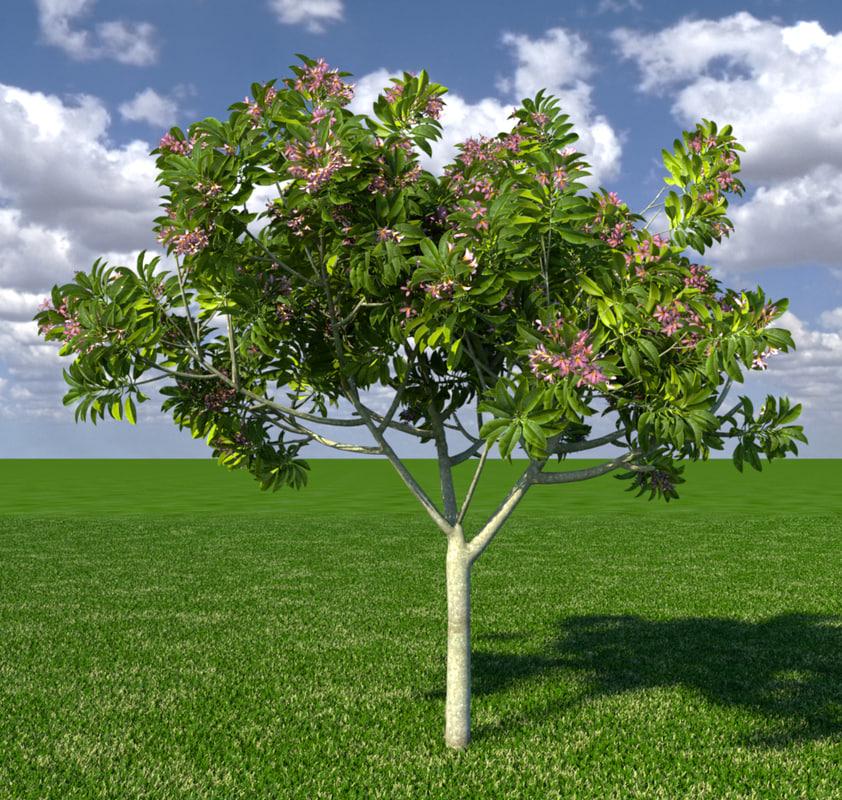 3d model frangipani tree