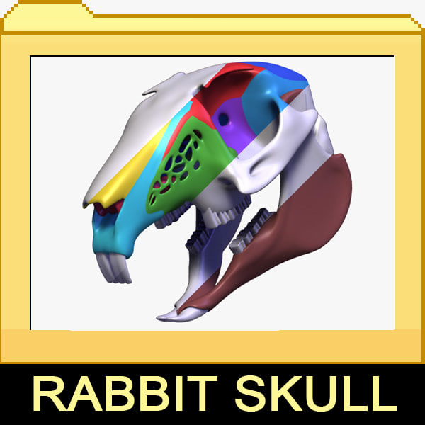 3ds max rabbit skull
