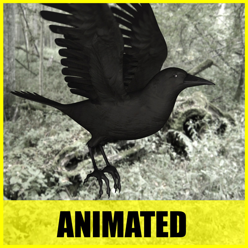 3d model crow flying animation