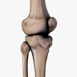 3d model knee bones patella