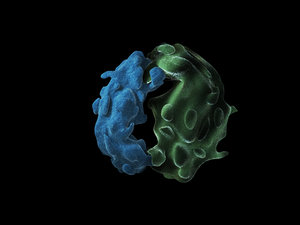 ribosomes amino acids ma