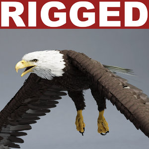 bald eagle rigged max