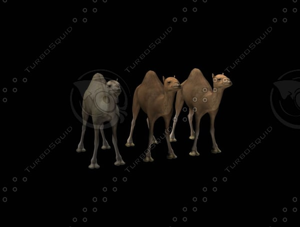 3ds max camel
