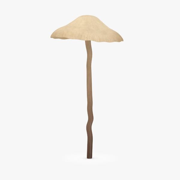 poisonous psilocybe bohemica 3d model