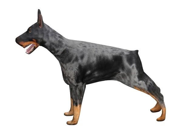 3d canine doberman dog model
