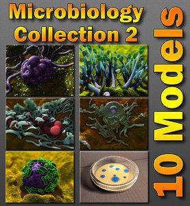 c4d bacteria structure fungus