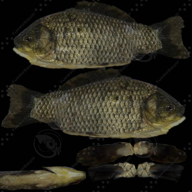 ma fish