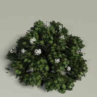 3d hydrangea sp