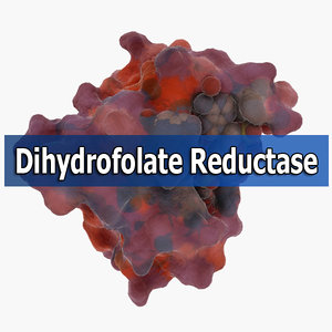 3d dihydrofolate reductase model
