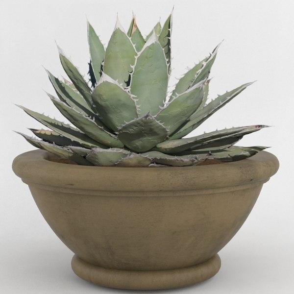 3d decorative pot plant model