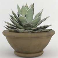 3d decorative pot plant model