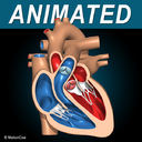 Heart X-Section