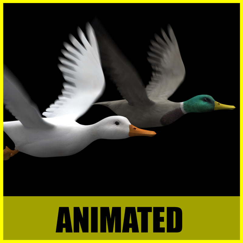 duck different flying animation 3d model