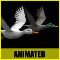Duck (Two different textures) - Animated