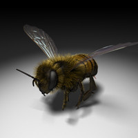 honey bee 3d c4d