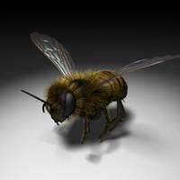 Honeybee c4d