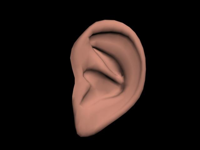 3d model polygonal human ear