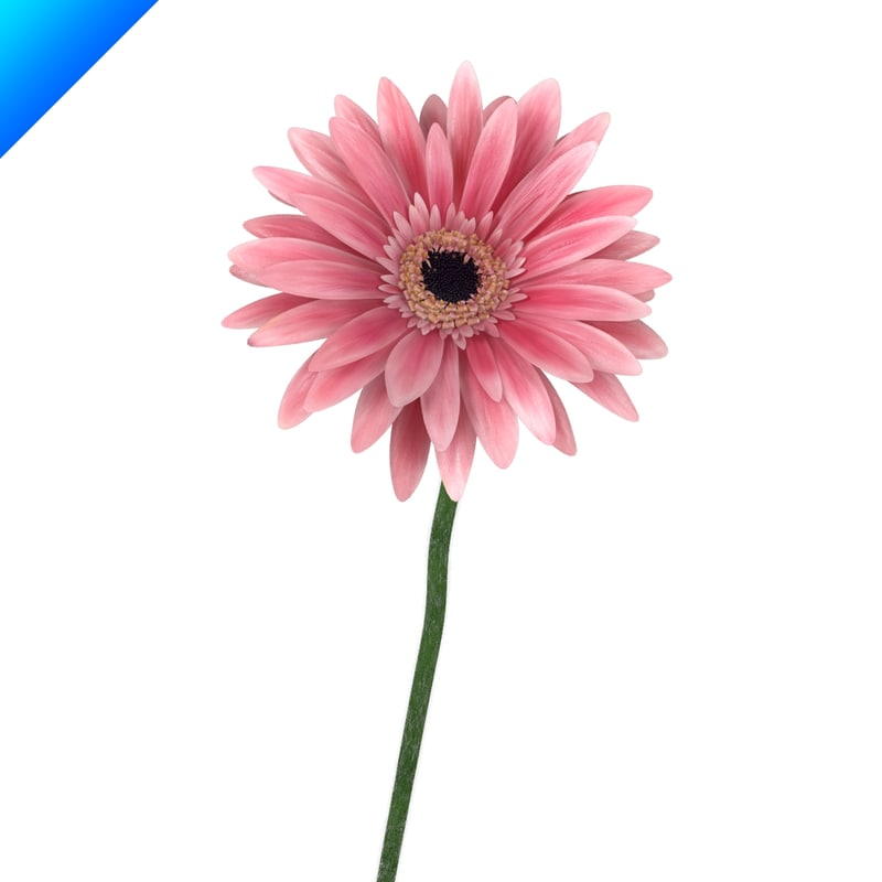 contemporary flower 3d c4d