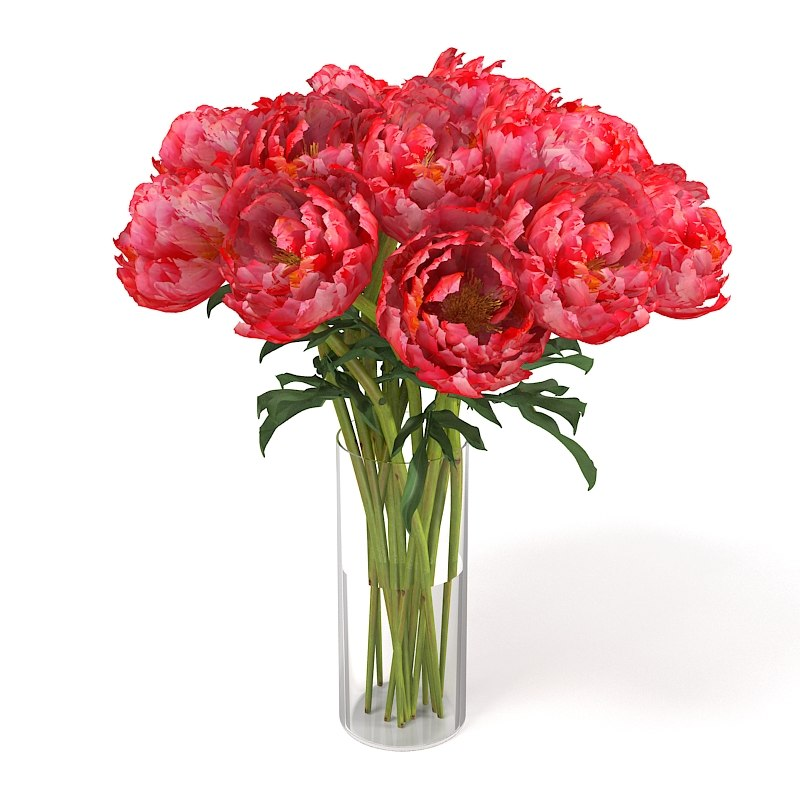 3d model of pink red peony