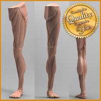 human leg anatomy 3d obj