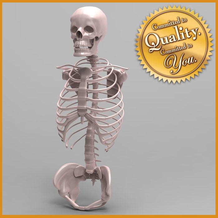 human skeleton torso skull 3ds