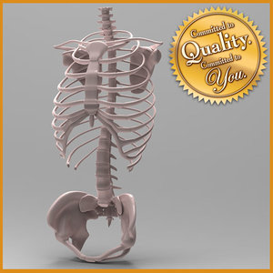 3ds max human skeleton torso