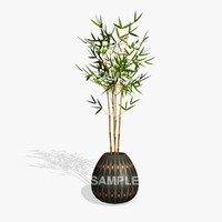 bamboo plant pl 3d 3ds
