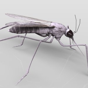 3ds max mosquito insect