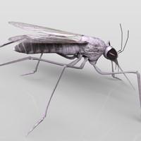 3D Mosquito